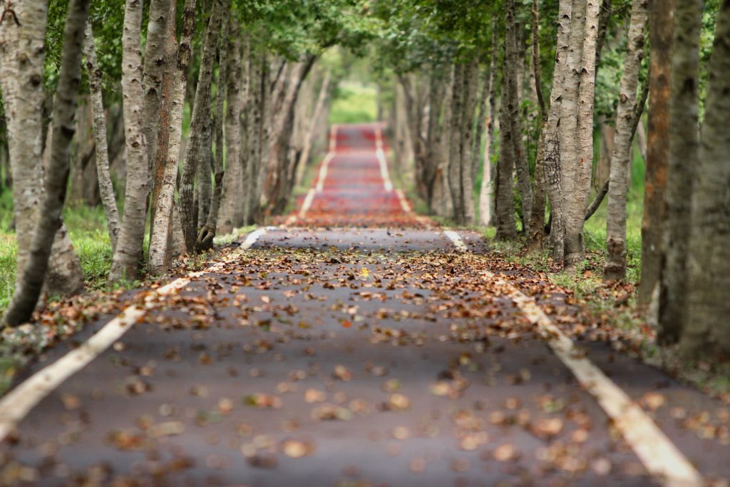 Long empty road covered with leaves